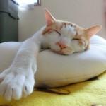 大賞・「重いなあ」彼の笑み足に毛布猫/3句だけ俳句コンテンスト