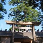 大賞・伊勢詣り苔むす木々に法師蝉/3句だけ俳句コンテンスト