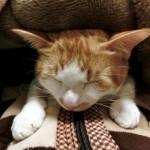 猫俳句・猫川柳専門の投稿サイト『にゃーの575』を公開しました!
