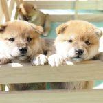 俳句と犬の意外な関係。俳句は犬筑波集から生まれた。